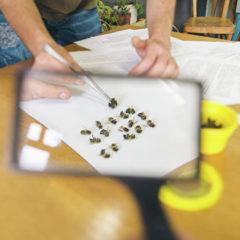 Ученые Крыма выведут «зимнестойких» пчел с высокой медопродуктивностью