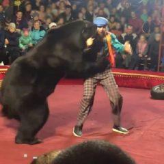 Медведь напал на дрессировщика в цирке. Видео