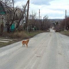 В ЛНР около 400 домов остались без электричества из-за непогоды