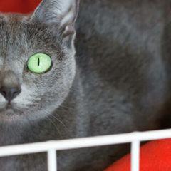 Ученые рассказали, как понять, какое настроение у кошки